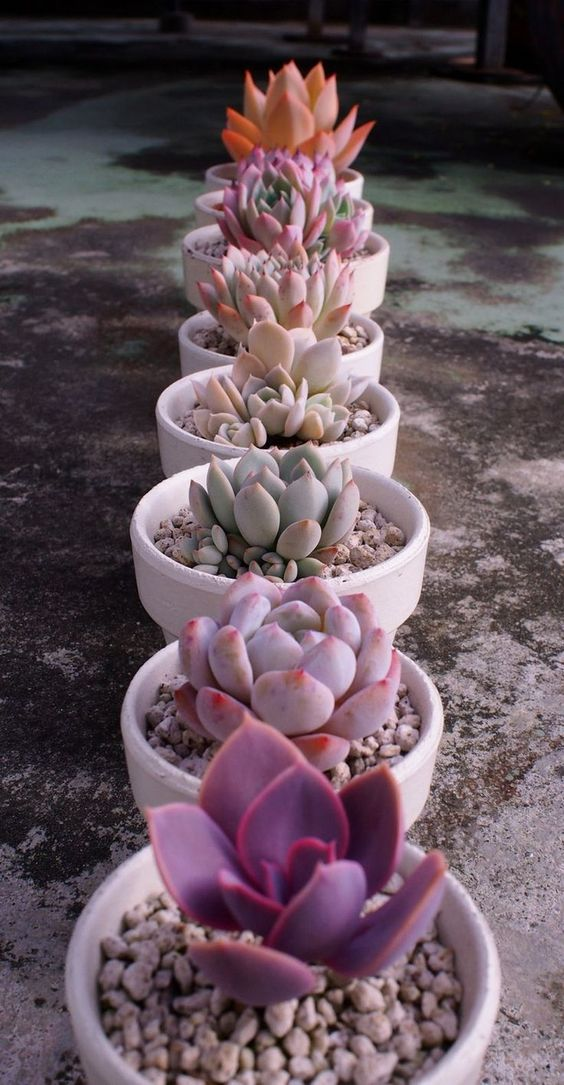 60+ DIY Indoor Succulent Arrangements Ideas 2019