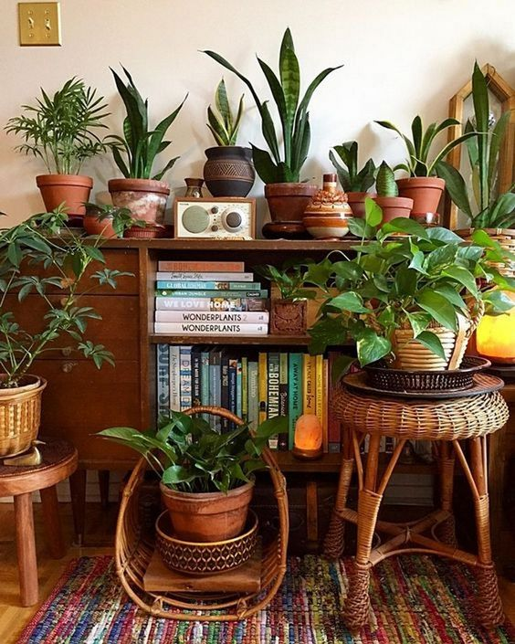 36 Ways to Create Your Own Plant Zoom